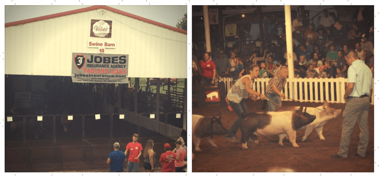 Jobes Insurance Partners with MAX Insurance to Fund 4H Hog Show at Knox County Fair