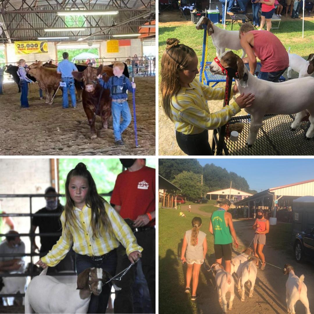 Jobes Insurance Knox County Fair